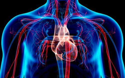 aparell-circulatori